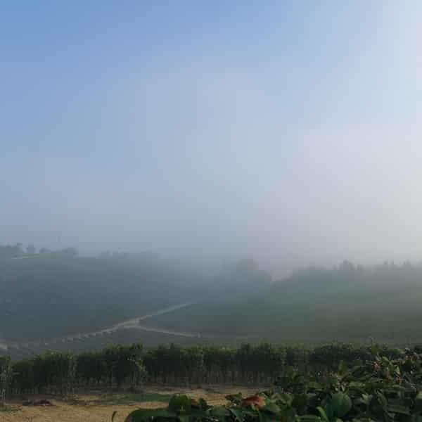 nebbia vigneto Giorni