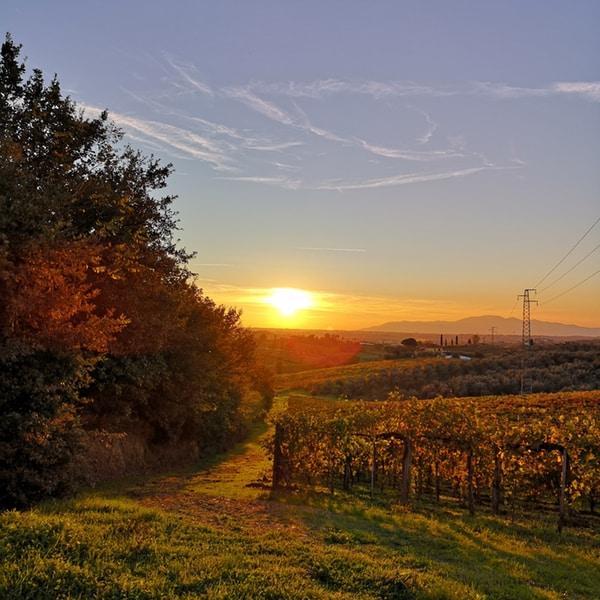 tramonto azienda vitivinicola Giorni